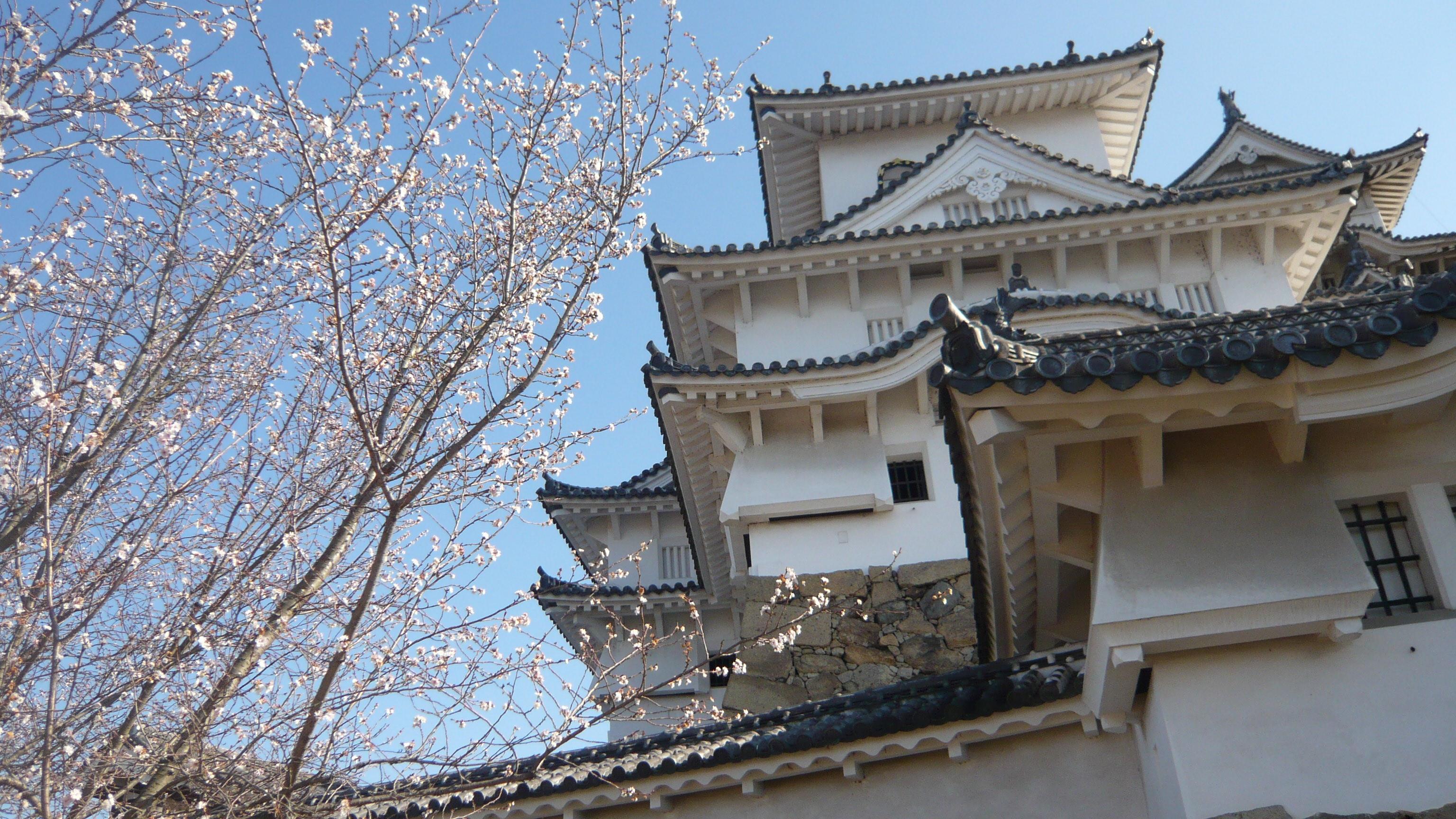 Asselio Assurances - Japon